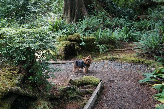 Jamie's Rainforest Inn: Pet friendly