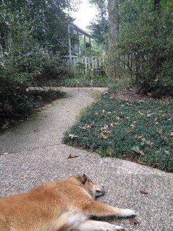 Rosemont Plantation: Dog at entrance