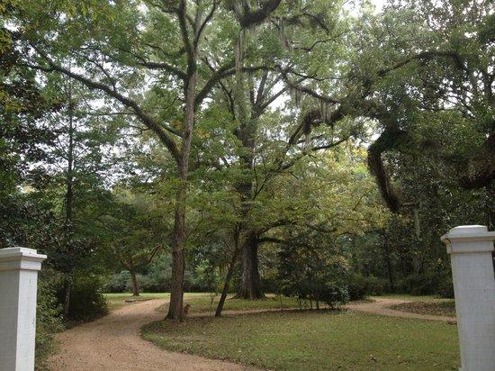 Rosemont Plantation