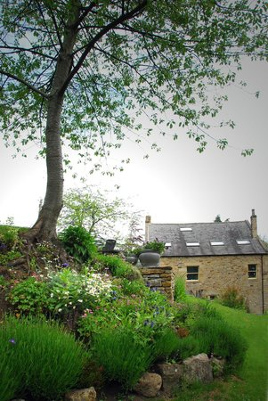 Dilston Mill B&B: View of house from garden