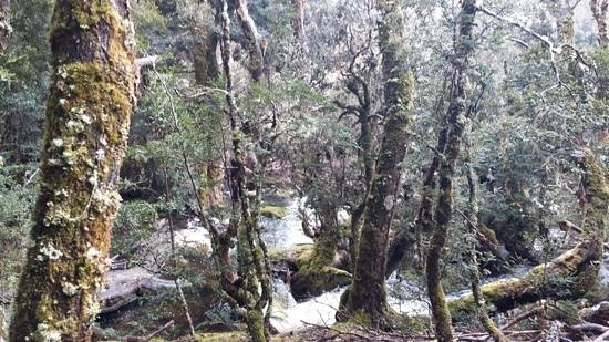 Cradle Mountain Hotel: waterfall boardwalk on the grounds