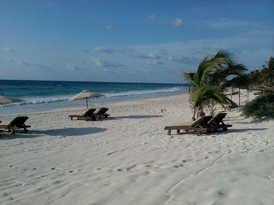 Azucar Hotel: the azucar beach
