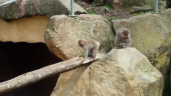 City Park: gorgeous baby monkey