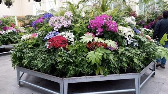 City Park: greenhouse