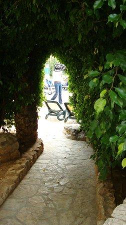 Hipotels Marfil Playa: Petit passage taillé dans un arbre