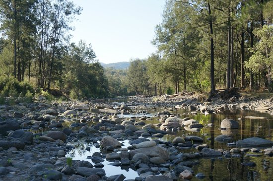 Takarakka Bush Resort & Caravan Park : creek flowing through the resort