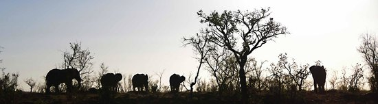 Tshwene Lodge: Elephants against the sunset during bush sundowner stop