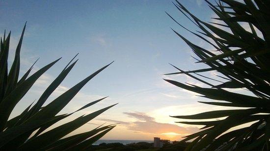 Mediterraneo Albergo: Пальмы на крыше