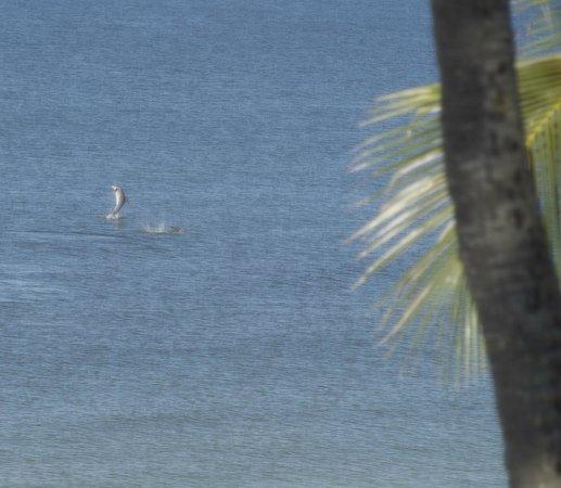 Sandpiper Gulf Resort: View from the Beach