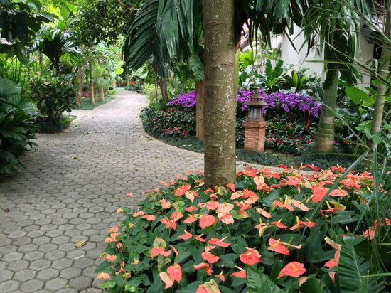 Laluna Hotel and Resort: more gardens