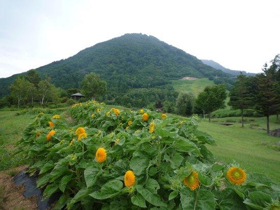 Kijimadaira-mura, Japan: 夏