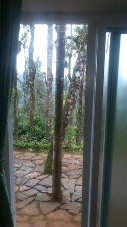 Kaivalyam Retreat: Trees outside Room