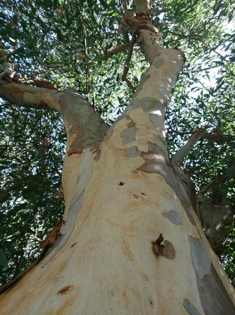 Le Palme Garden: eucalyptuses are greatsmelling, when rain
