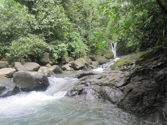 Uvita Waterfall: Stream