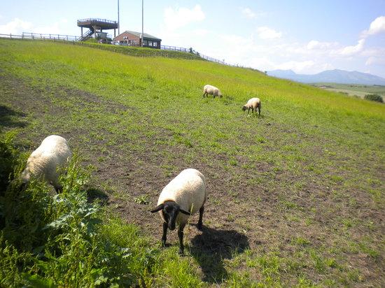 Tawadaira: 牧羊