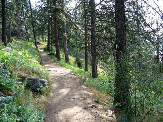 Coeur d'Alene Lake: Hiking path