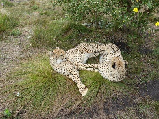 Tenikwa Wildlife Awareness Centre: Gebhard