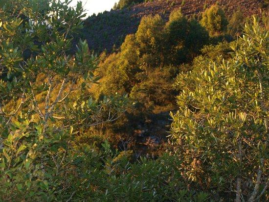 Misty Mountain: uitzicht vanaf terrasje