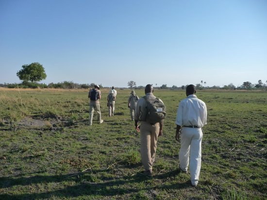 Moremi Crossing Camp : Out on the open grassland