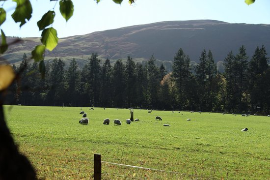 Blair Castle and Hercules Gardens: The fields