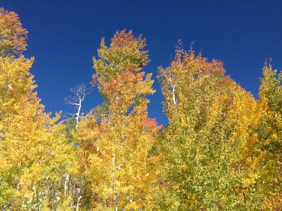 EagleRidge Lodge: Steamboat fall colors