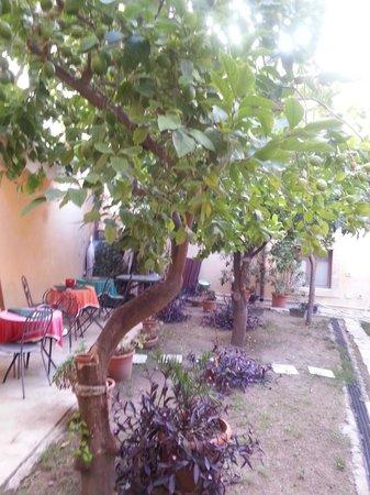 Montevergini Bed and Breakfast: giardino del B&B