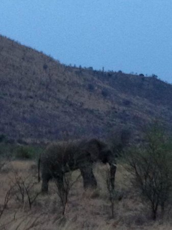 Kwa Maritane Bush Lodge: Elephant spotted at Pilanesburg Game Park during afternoon drive.