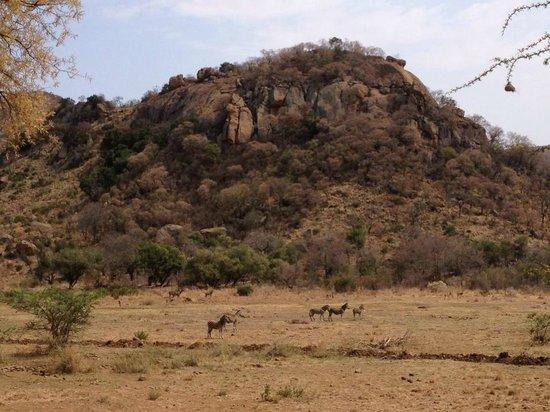 Kwa Maritane Bush Lodge: View from the terrace of the restaurant - kudu, impala and zebra
