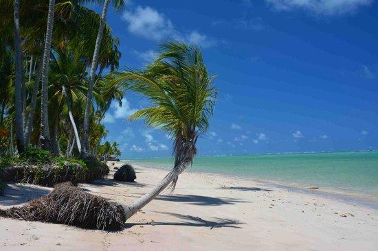 Praia do Patacho: Sem palavras!