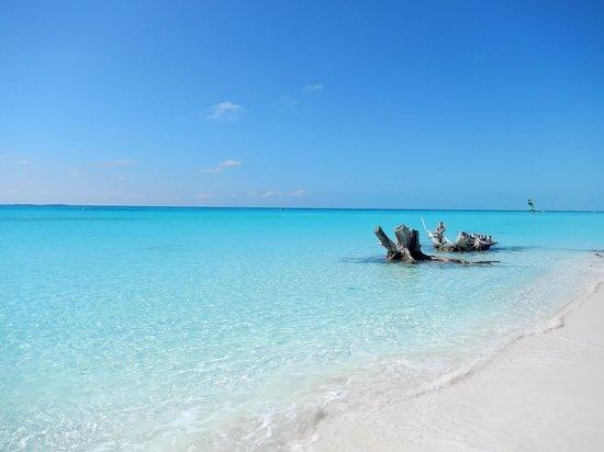 Playa Paraiso: Stumps at the beach
