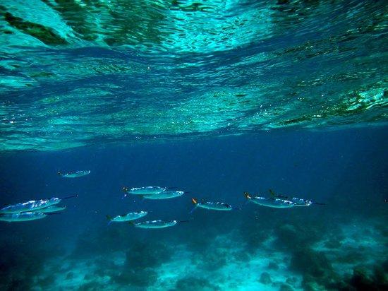Playa Paraiso: Fish!