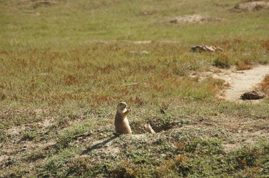 Theodore Roosevelt National Park South Unit Prairie Dog Town
