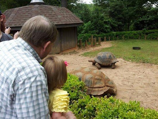 Greenville Zoo: Tortoises