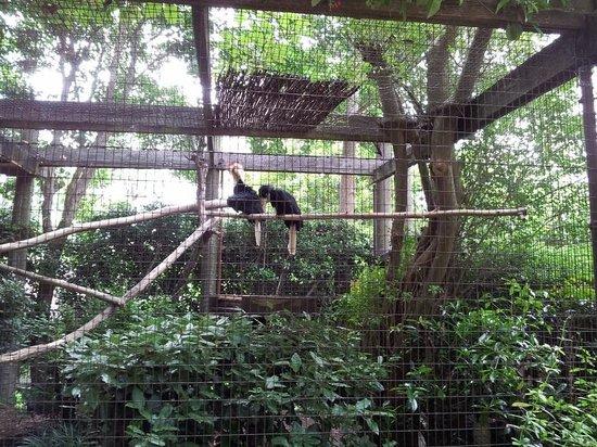 Greenville Zoo: Tropical Bird