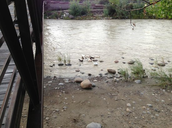 Courtyard Farmington : Ducks under the bridge along the river walk