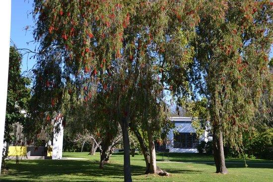 Bloomestate: garden