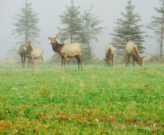 Elk Country Visitor Center : Elk State Park