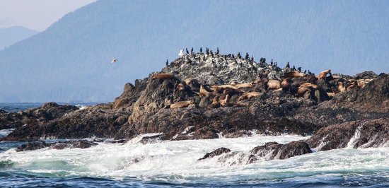 Jamie's Whaling Station and Adventure Centres: Large Sea Lion Colony