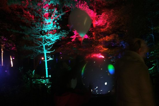 Faskally Wood: Enchanted Forest