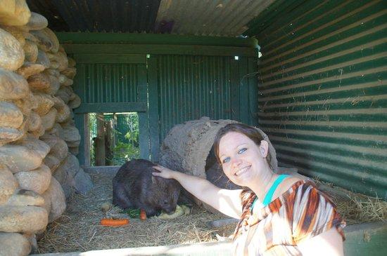 Daintree Wild Bed and Breakfast: Helping the volunteers