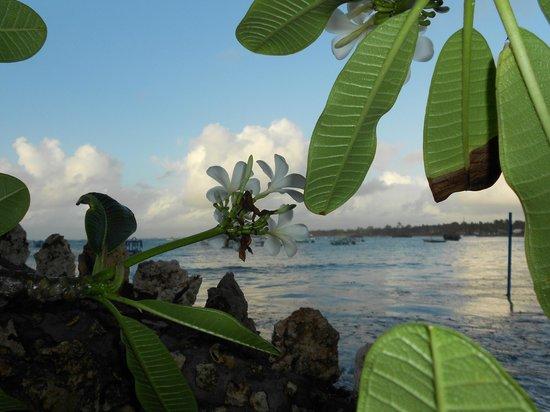 Blue Bay Village: Flora sulla spiaggia
