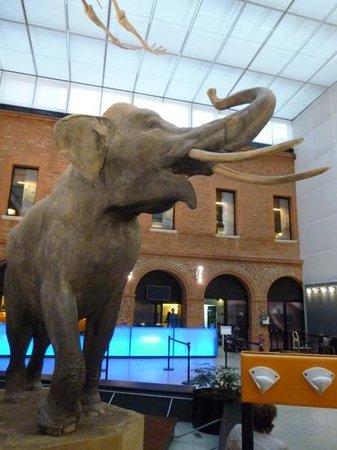 Museum of Natural History: entrée museum