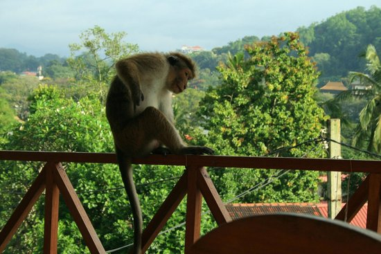 Hotel Mango Garden: I wansn't the only one enjoying the view