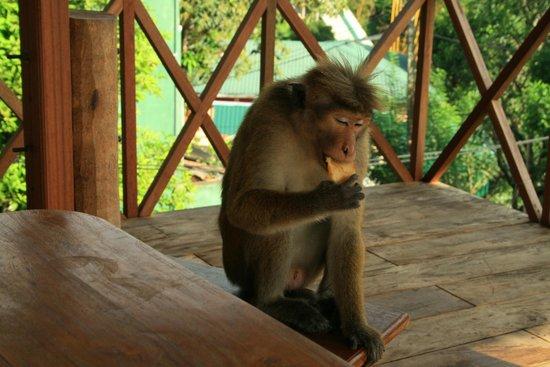 Hotel Mango Garden : My breakfast companion