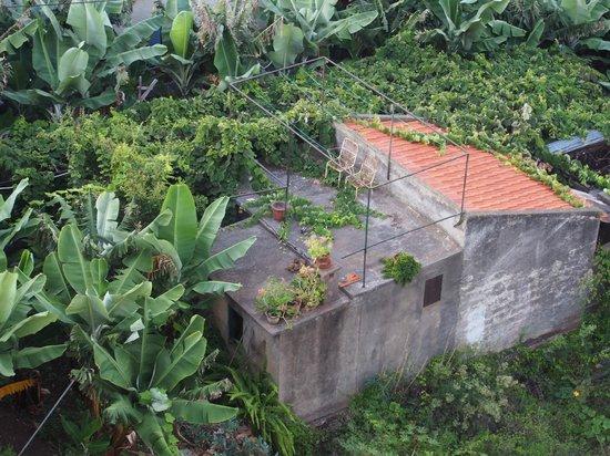 Golden Residence : bananeraie