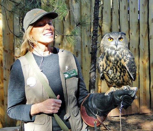 Bearizona Wildlife Park: Owl with Handler