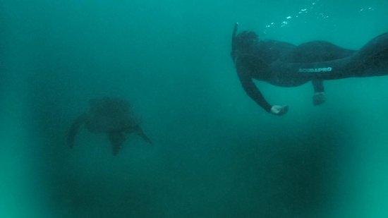 Floreana Lava Lodge: Galapagos Sea Turtle Paradise