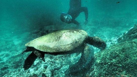 Floreana Lava Lodge: Galapagos Snorkeling