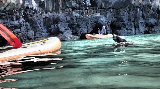 Floreana Lava Lodge: Galapagos Stand up Paddle Fun Encounters
