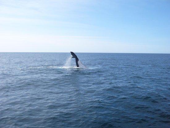 Cat Balou Cruises : Baleine